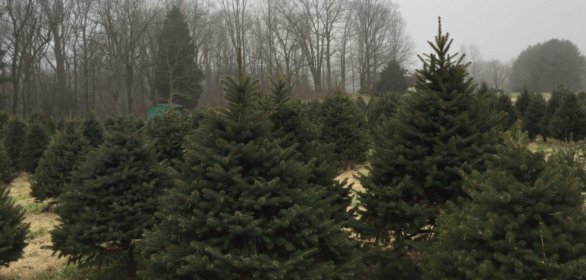 Hilltop Tree Farm